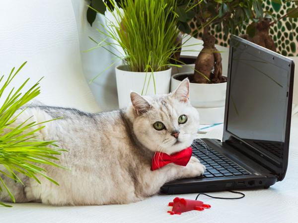 パソコンや趣味のこと