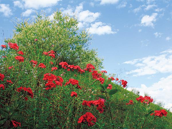 8月、赤いフロックス、緑の山、青い空の鮮やかなコントラスト。