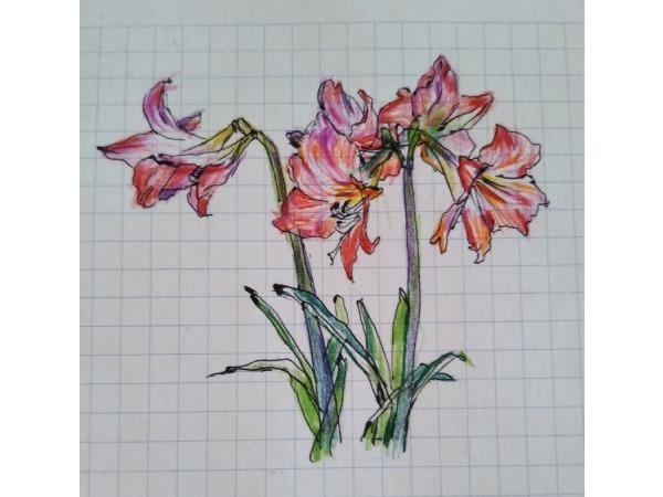 花壇の百合の花