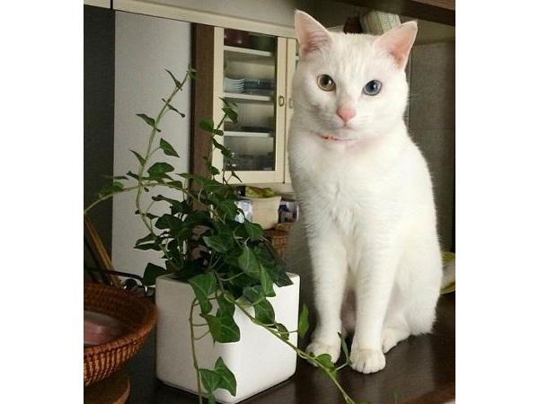 """保護猫""""ちょっくら"""""""