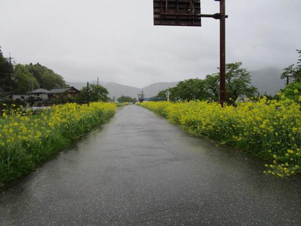 湖を1周するにはこの道を進む