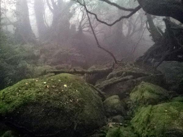 屋久島 縄文杉への挑戦 白谷雲水峡