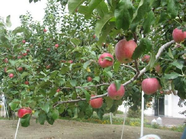 リンゴの街で思い出したのは昭和36年