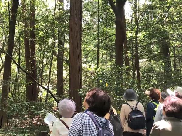 【草花散歩 2019年5月】イベント開催レポート 明治神宮の森と花菖蒲&代々木公園でバラを楽しむ