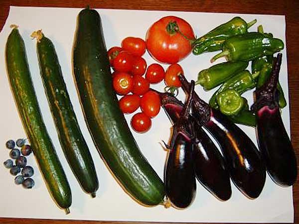 ある夏の日の収穫物