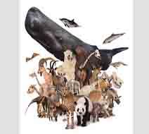 国立科学博物館「大哺乳類展2」5組10名様ご招待